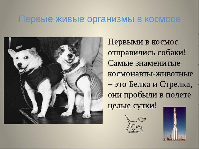 Первые живые организмы в космосе Первыми в космос отправились собаки! Самые з...