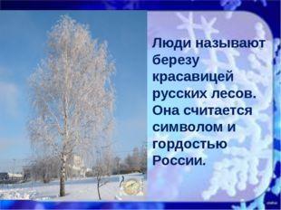 Люди называют березу красавицей русских лесов. Она считается символом и горд