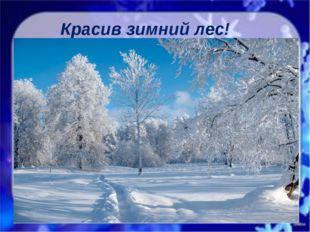 Красив зимний лес!
