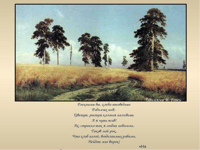 Шишкин И. Рожь Роскошны вы, хлеба заповедные Родимых нив,- Цветут, растут кол...