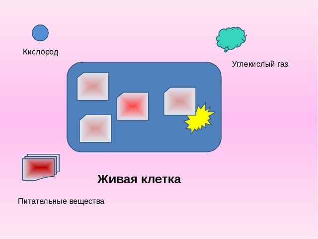Кислород Питательные вещества Углекислый газ Живая клетка