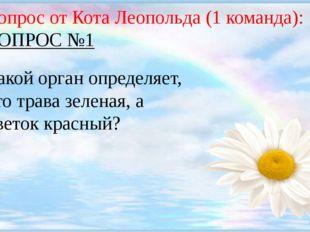 Вопрос от Кота Леопольда (1 команда): ВОПРОС №1 Какой орган определяет, что