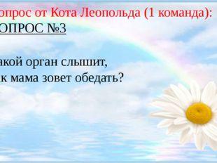Вопрос от Кота Леопольда (1 команда): ВОПРОС №3 Какой орган слышит, как мама