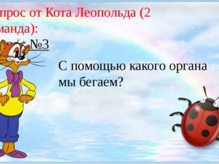 Вопрос от Кота Леопольда (2 команда): Вопрос №3 С помощью какого органа мы б