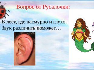 Вопрос от Русалочки: В лесу, где пасмурно и глухо, Звук различить поможет…
