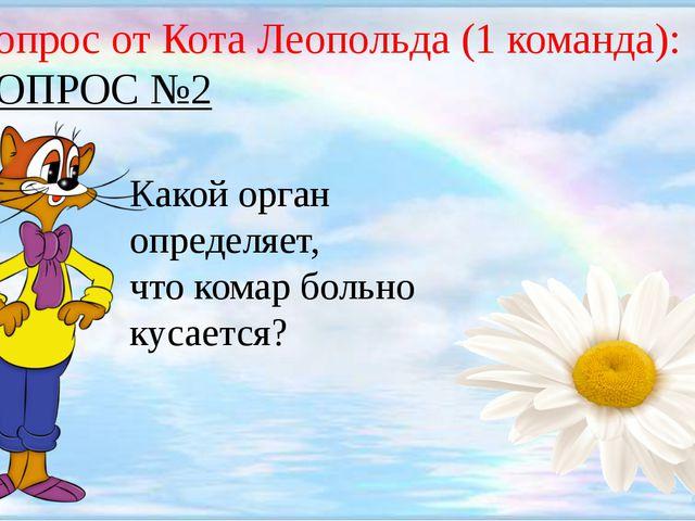 Вопрос от Кота Леопольда (1 команда): ВОПРОС №2 Какой орган определяет, что...