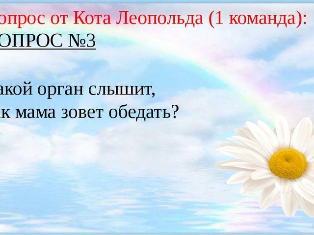 Вопрос от Кота Леопольда (1 команда): ВОПРОС №3 Какой орган слышит, как мама...
