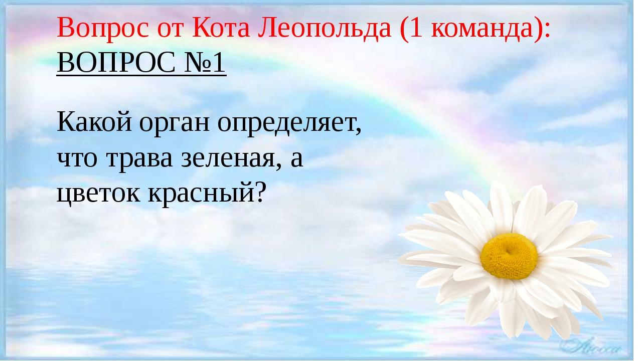 Вопрос от Кота Леопольда (1 команда): ВОПРОС №1 Какой орган определяет, что...