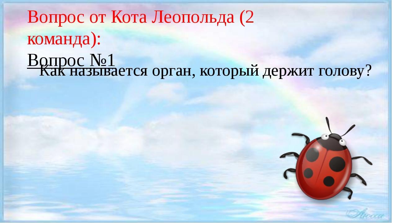 Вопрос от Кота Леопольда (2 команда): Вопрос №1 Как называется орган, которы...