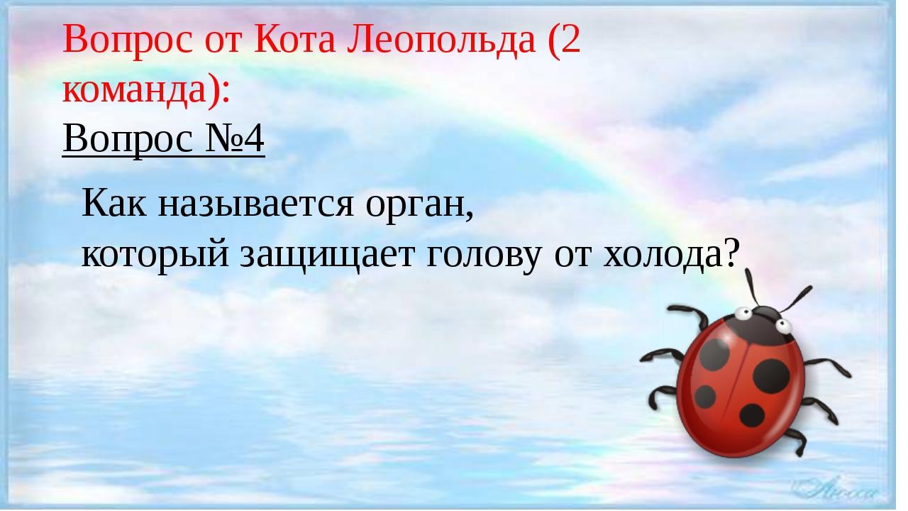 Вопрос от Кота Леопольда (2 команда): Вопрос №4 Как называется орган, которы...