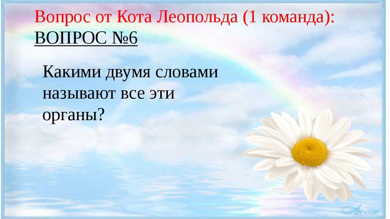 Вопрос от Кота Леопольда (1 команда): ВОПРОС №6 Какими двумя словами называю...