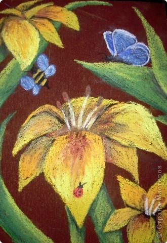 Рисование и живопись: Лилии на наждачной бумаге Карандаш. Фото 1