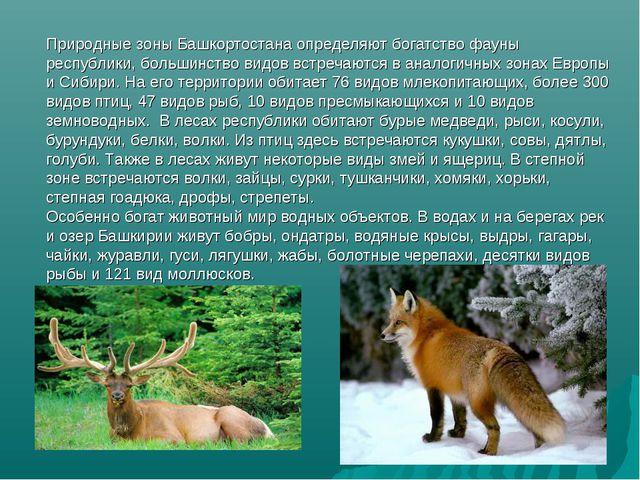 Природные зоны Башкортостана определяют богатство фауны республики, большинст...