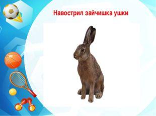 Навострил зайчишка ушки