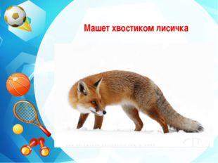 Машет хвостиком лисичка