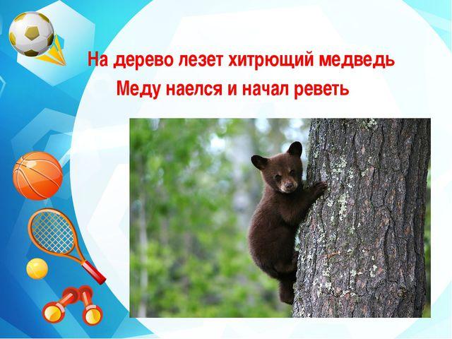 На дерево лезет хитрющий медведь Меду наелся и начал реветь