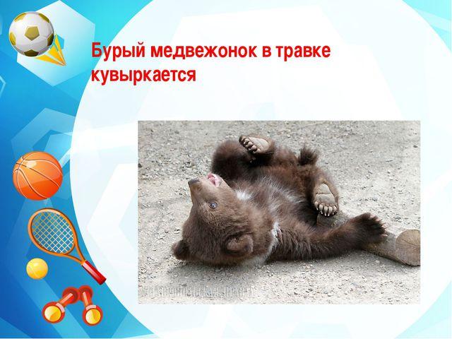 Бурый медвежонок в травке кувыркается