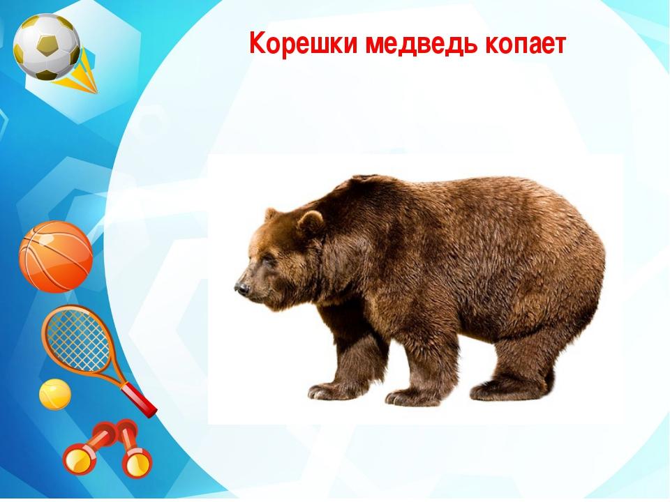 Корешки медведь копает