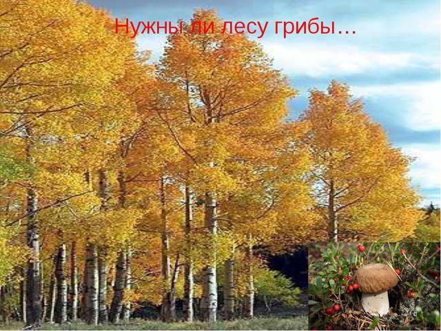 Нужны ли лесу грибы…