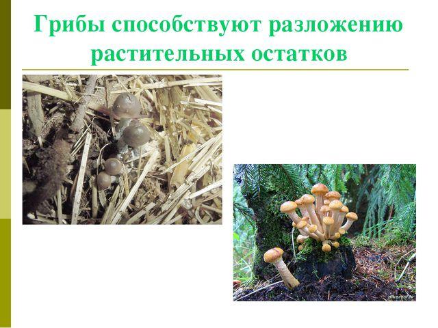 Грибы способствуют разложению растительных остатков