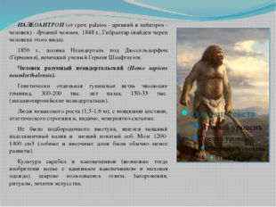 ПАЛЕОАНТРОП (от греч. palaios - древний и anthropos - человек) - древний че