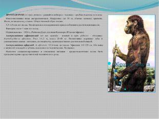 ПРОТОАНТРОП (от греч. proteros - ранний и anthropos - человек) - предшестве