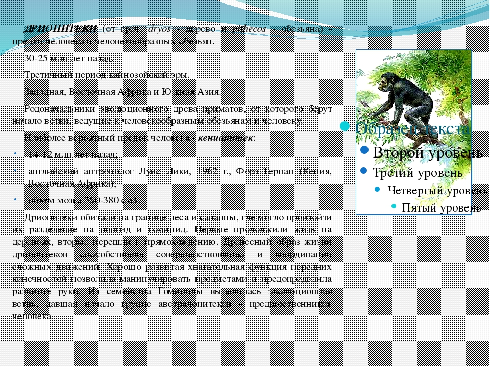 ДРИОПИТЕКИ (от греч. dryos - дерево и pithecos - обезьяна) - предки человек...