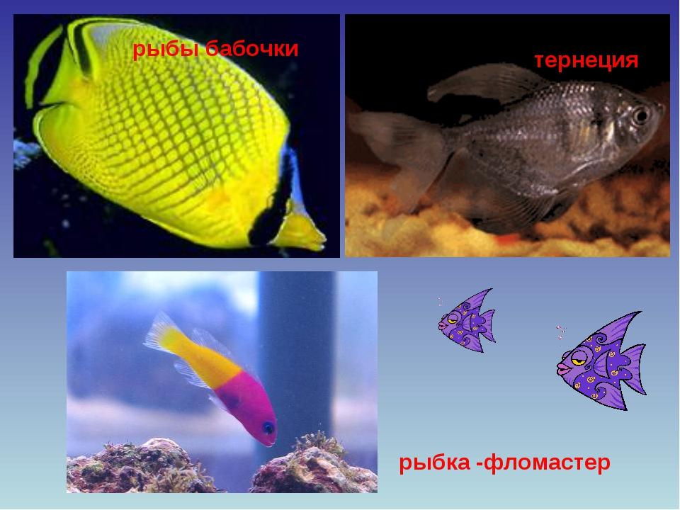рыбы бабочки тернеция рыбка -фломастер