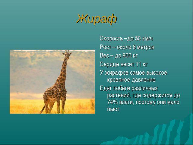 Жираф Скорость –до 50 км/ч Рост – около 6 метров Вес – до 800 кг Сердце весит...