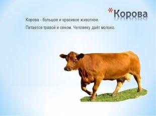 Корова - большое и красивое животное. Питается травой и сеном. Человеку даёт