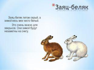 Заяц-беляк летом серый, а зимой весь мех чисто белый. Это очень важно для зв