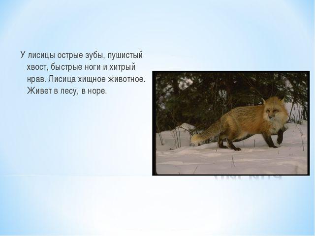 У лисицы острые зубы, пушистый хвост, быстрые ноги и хитрый нрав. Лисица хищн...