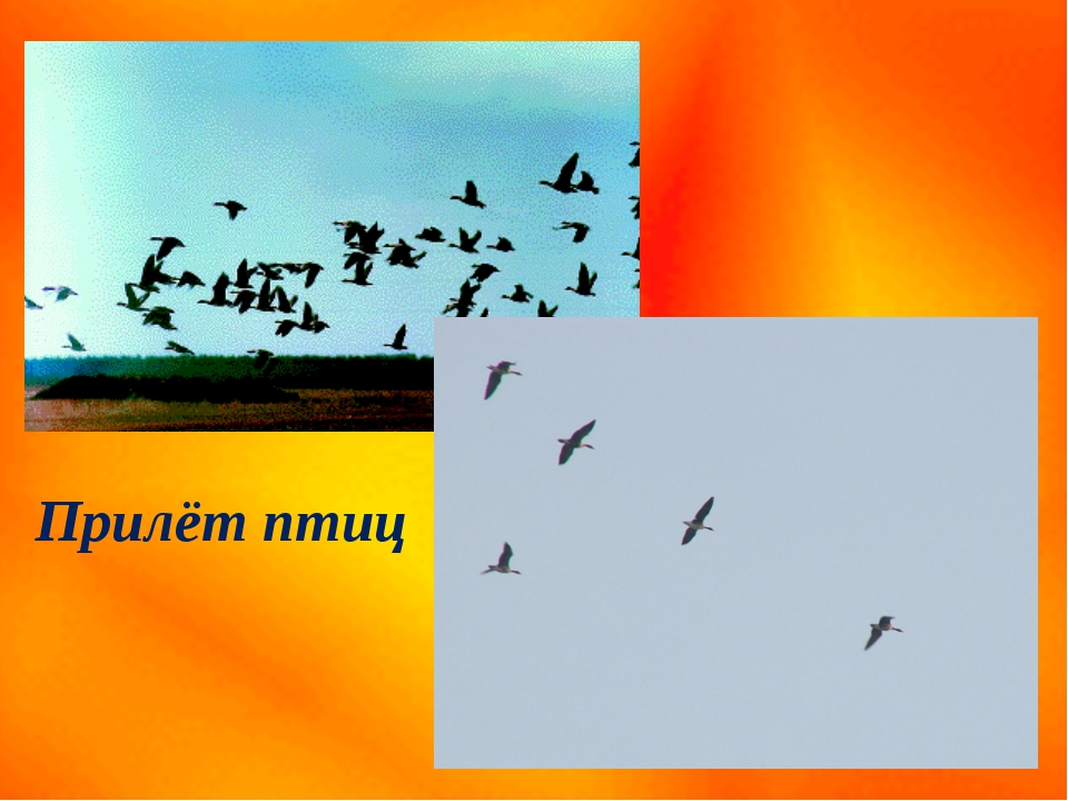 Прилёт птиц