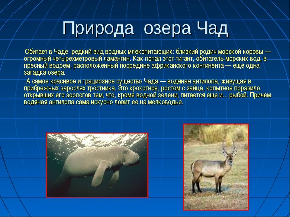 Природа озера Чад Обитает в Чаде редкий вид водных млекопитающих: близкий род...