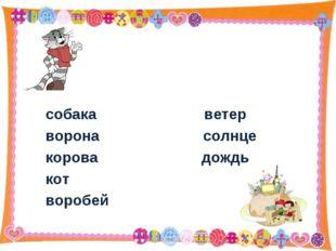 собака ветер ворона солнце корова дождь кот воробей * http://aida.ucoz.ru *