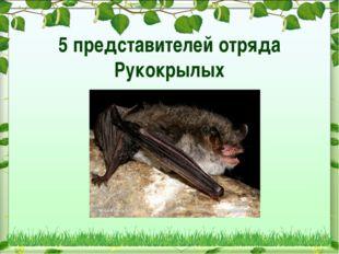 5 представителей отряда Рукокрылых