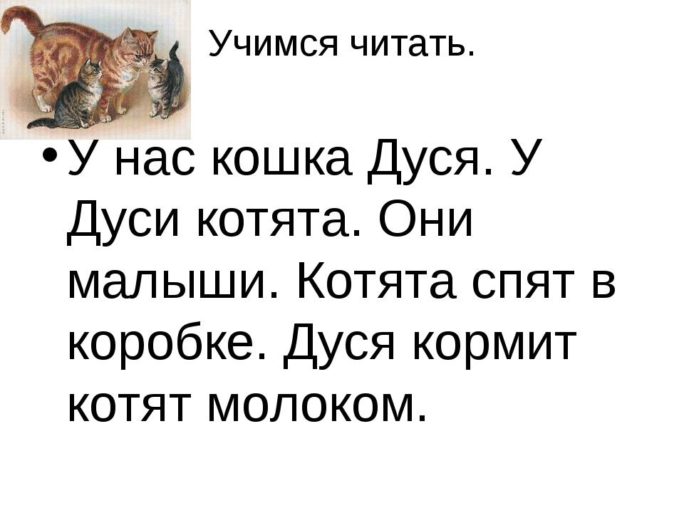 Учимся читать. У нас кошка Дуся. У Дуси котята. Они малыши. Котята спят в кор...