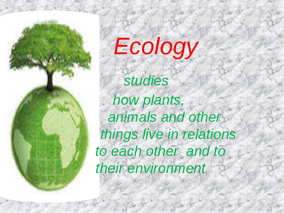 Ecology studies how plants, animals and other things live in relations to ea...