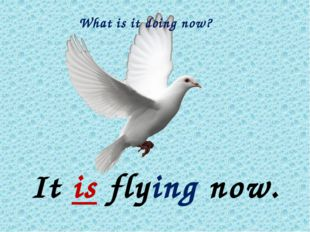 What is it doing now? It is flying now.
