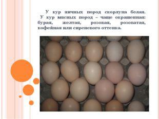 У кур яичных пород скорлупа белая. У кур мясных пород – чаще окрашенная: бур