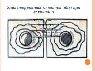Характеристика качества яйца при вскрытии