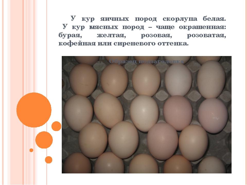 У кур яичных пород скорлупа белая. У кур мясных пород – чаще окрашенная: бур...