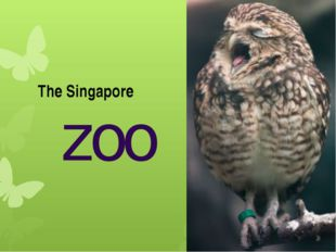 zoo The Singapore