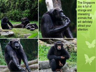 The Singapore zoo is full of strange and interesting animals that will defini