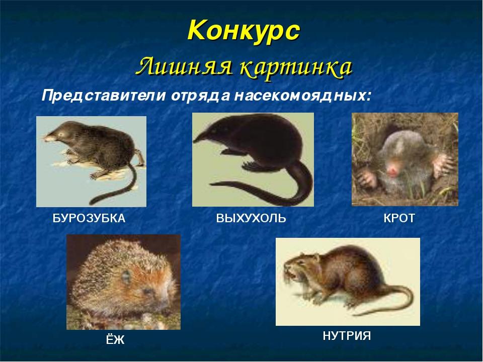 Относится к отряду грызунов, а не насекомоядных Конкурс Лишняя картинка БУРОЗ...