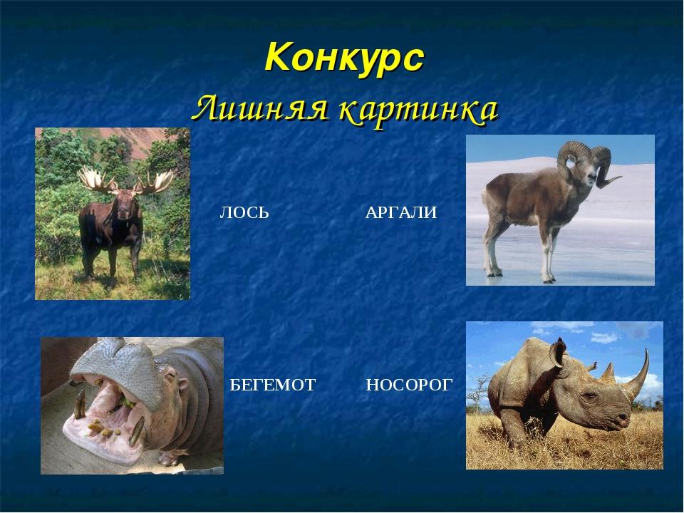 Конкурс Лишняя картинка ЛОСЬ АРГАЛИ БЕГЕМОТ НОСОРОГ Носорог отряд непарнокопы...