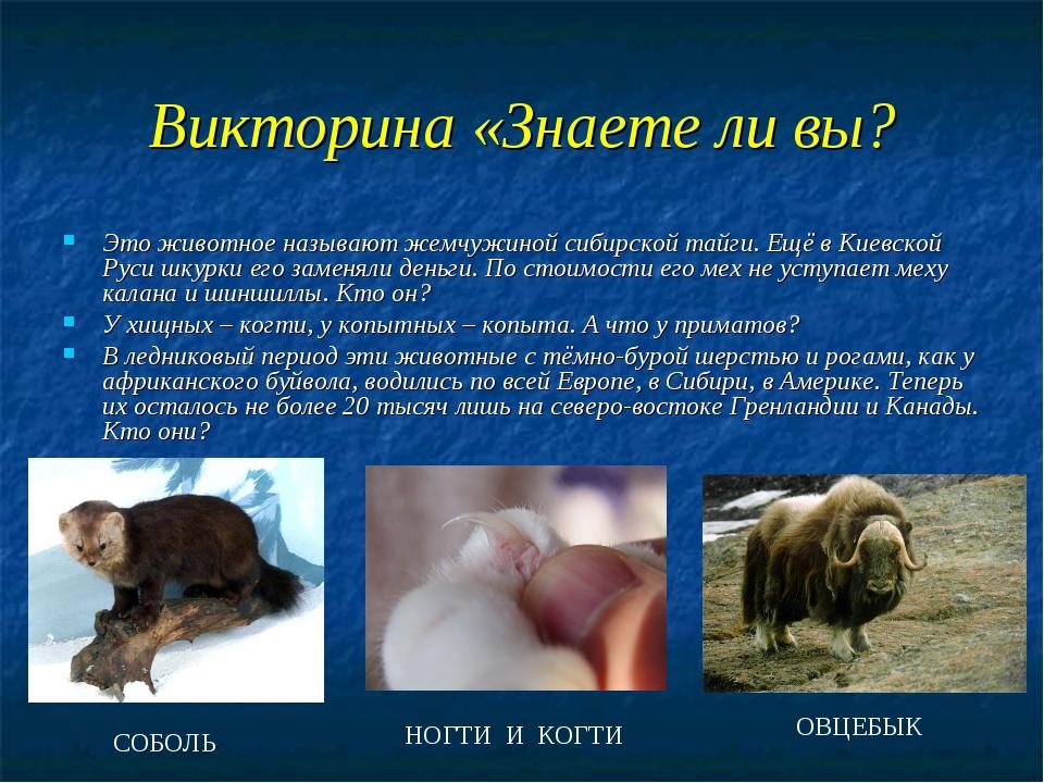 Викторина «Знаете ли вы? Это животное называют жемчужиной сибирской тайги. Ещ...