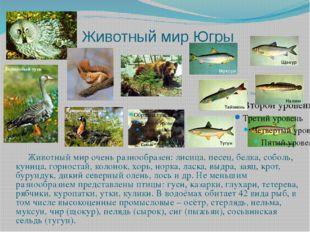Животный мир Югры Животный мир очень разнообразен: лисица, песец, белка, собо