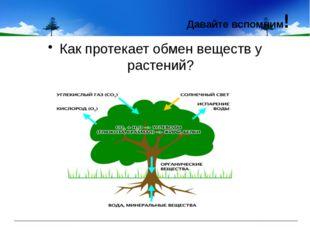 Как протекает обмен веществ у растений? Давайте вспомним!