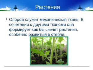Растения Опорой служит механическая ткань. В сочетании с другими тканями она